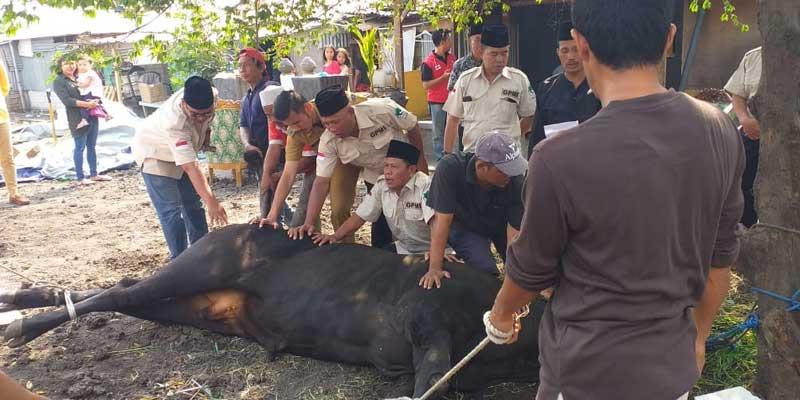 Lurah Semanan Hadiri Penyembelihan Hewan Qurban dari Gubernur DKI